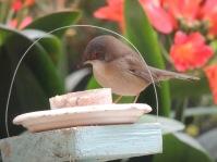 Celebramos el cumpleaños del blog, y nos dieron pastel para pájaros